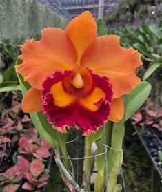 How to care for orchids? Click and watch the video. Exotic Flowers, Orange Flowers, Tropical Flowers, Colorful Flowers, Yellow Roses, Pink Roses, Shade Flowers, Bulb Flowers, Beautiful Flowers