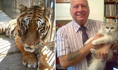 David Barnes has almost raised the £11,500 needed to move Phevos, a 485lb tiger, from a zoo in Trikala, north-west Greece to one in San Diego, California.