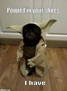 There is just something about Pugs that is so funny.  And seeing them dressed up kills me. Haha