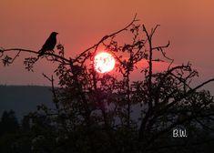 Sonnenuntergang in Dobel Photo B.W.