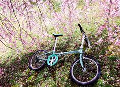 Copyright © たれ 様 / ボードウォーク 2009年位 / 転勤で広島へ来てちょうど半年、紆余曲折の毎日を過ごしております。なれない生活にヤラレそうになり 休日も引きこもりっきりになりそうになる都度部屋の片隅に置いてあるボードウォークに背中を押され走り出すことが習慣になっております。今年は地元の桜を見ることができなくて寂しい思いをしていましたが、東広島市安芸津町の正福寺山に向けてポタした時、眼下に見下ろす瀬戸内海と桜のコントラストの美しさに心を救われました。