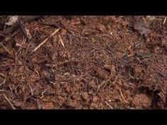 Finca Josco Bravo - www.agroecologiapr.org - YouTube