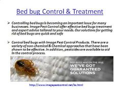 Bed Bug Control Bangalore