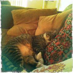 Leo sleeping