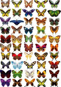 Butterflies ,Butterflies