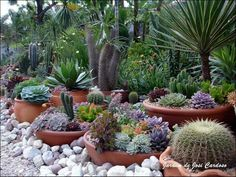 8 Exquisite Hacks: Garden Landscaping With Stones Water Features garden landscaping plans square feet.Rock Garden Landscaping Backyard Ideas garden landscaping diy tips and tricks. Succulent Landscaping, Succulent Gardening, Cacti And Succulents, Planting Succulents, Container Gardening, Cactus Plants, Organic Gardening, Cactus Decor, Cactus Art