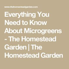Everything You Need to Know About Microgreens - The Homestead Garden | The Homestead Garden