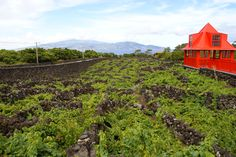 Museu da vinha do Pico Açores, Azores, Portugal, Wine Museum