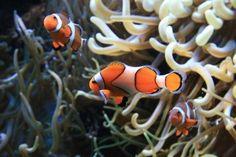 Saltwater Aquarium Fish Species