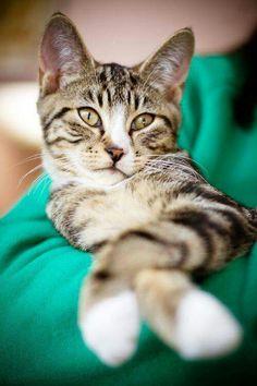 Cat-a-tude!