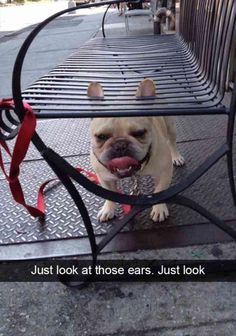 Funny Animal Pictures #funnydogs