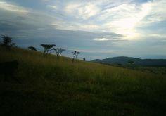 I just classified this image on Snapshot Serengeti! http://www.snapshotserengeti.org