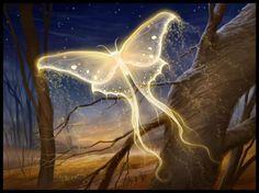 butterfly majick