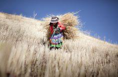 Luzmila, lleva a su casa la cebada que cosecho en la pequeña granja de su familia en la Cordillera de los Andes en un pueblo llamado Sotopampa, en Perú. (© Alejandro Kirchuk / National Geographic Photo Contest)