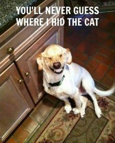 he hid the cat in the cabinet, Cat: GET ME OUT OF HERE!!!!!   Dog: NEVER!!! Im supposed to be the only adorable person in this house!