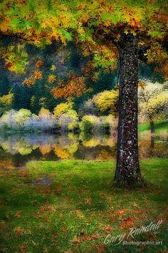 Autumn Dreamland.  Fall leaves in the Columbia River Gorge, Oregon.