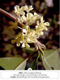 Manual Flores Bach: ALBUM FOTOS FLORES BACH Bach Flowers, Natural, Health Fitness, Plants, Color, Pictures Of Flowers, Medicinal Plants, Colour, Plant