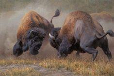 Summer Rumble by Kyle Sims Wildlife Buffalo Bison S/N Ltd Ed Canvas 2436 Buffalo Animal, Buffalo Art, Wildlife Paintings, Wildlife Art, Majestic Animals, Animals Beautiful, Animal Bufalo, Buffalo Painting, Photo Animaliere