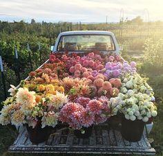 Flower farm? Yes please.