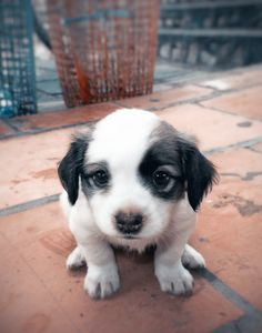 10 Pups That Want To Be Your Valentine!