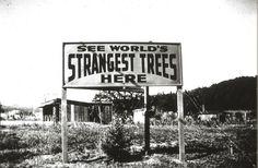 Axel Erlandson's Tree circus