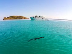 You said you wanted to see wild animals on your Australian vacation. Well, we found them. Sunglass Hut, Summer Events, Sunglasses Online, Wild Animals, Great Deals, Warm Weather, Whale, Adventure, Sunglasses
