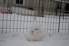 Bunday: The Most Squeedorable Snowball Ever - Cheezburger