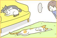 ぬくもりのたねお | うちの猫がまた変なことしてる。【猫まんが】
