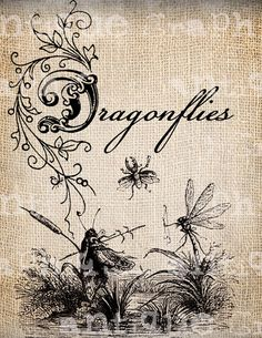 Antique Summer Insect Dragonfly Fancy Ornate llustration Digital Download for Papercrafts, Transfer, Pillows Burlap No 2839
