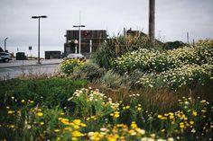 half moon bay, CA Half Moon Bay, Wild Flowers, Road Trip, Scenery, Coast, Ocean, California, Canada, Brown