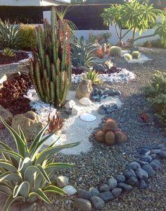 Cactus, succulents, rocks, sand dollars In my succulent garden.