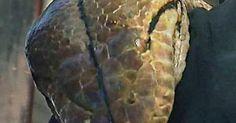MEDUSA: Το μεγαλύτερο φίδι στον κόσμο που ζει σε αιχμαλωσία (VIDEO)