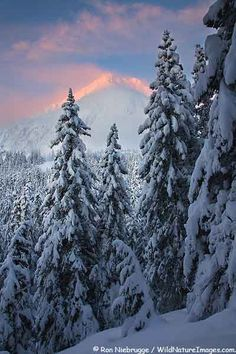 ✯ Winter sunrise along the Lost Lake Trail, Chugach National Forest, Seward, Alaska