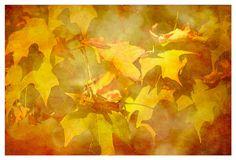 Autumn Home Decor Photograph, burnt orange, mustard, Autumn, nature fine art print