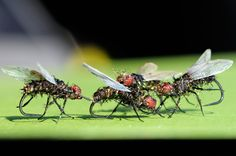 fly tying | fly fishing flies, wholesale flies, fly tying kits, The Bug Box ...