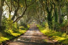 tree tunnels dark hedges in northern ireland