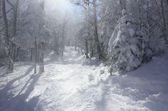 Les sous-bois au Mont SUTTON by Mont SUTTON, via Flickr
