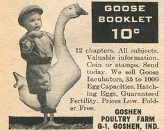 Everything you ever wanted to know about geese, but were afraid to adk. Farm Journal, 1952.