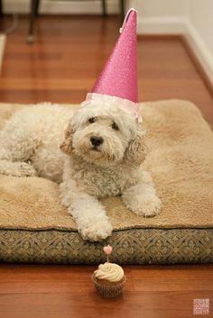 Happy birthday doggie