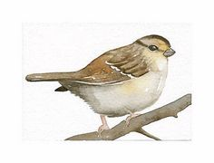 SPARROW Aceo Art Original Watercolor painting by by lorisworld