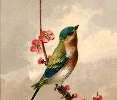 This is a beautiful Free Bird Picture with Blossoms! This very pretty Antique Card shows a lovely colorful bird perched on a branch with Pink Blossoms!