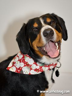 Me wearing my pawsome Christmas bandana *Waggy tail*