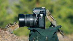 animais que querem ser fotografos (13)