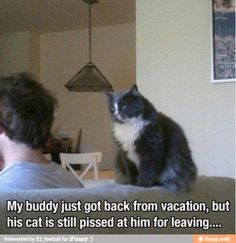 Cats holding grudges