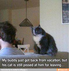 Cats holding grudges @Dayle Patronik-Schneider Patronik-Schneider Patronik-Schneider specht
