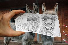 Funny Donkey Pencil vs Camera by Ben Heine (Part II) | Bored Panda