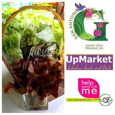 Future Farms, Fabulous Foods, Trinidad And Tobago, Cabbage, Gardens, Organic, Fresh, Vegetables, Outdoor Gardens