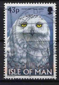 Owl postage stamp, Isle of Man.