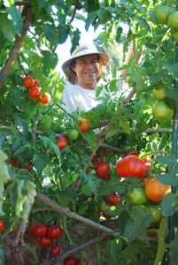 Complete organic blog with how to's. Wonderful blog!! Steve tending the tomato temple.