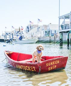 There Once Was A Pup On Nantucket